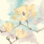 Magnolias in White I