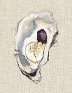 Oyster Shell Study IV