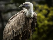 Vulture 4
