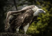 Vulture 5
