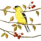 Birds & Berries II