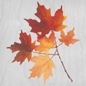 Autumn Leaves IV