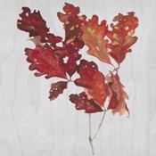 Autumn Leaves VIII