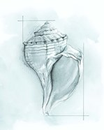 Coastal Shell Schematic I