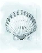 Coastal Shell Schematic III