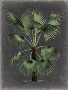 Dramatic Palm II