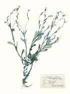 Pressed Flowers in Spa II