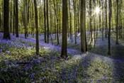 Fairytale Forest Sunlight 2
