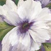 Violet Orchid II