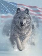 Running Wolves America