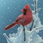 Cardinal - Cherry on Top