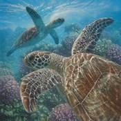 Sea Turtles - Turtle Bay - Square