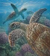 Sea Turtles - Turtle Bay
