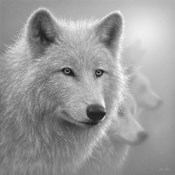 Arctic Wolves - Whiteout - B&W