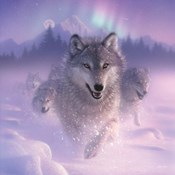 Running Wolves - Northern Lights - Square