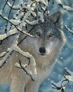 Wolf - Broken Silence
