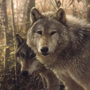 Wolves - Woodland Companions
