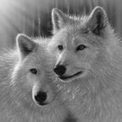 Wolves - Sunlit Soulmates - B&W