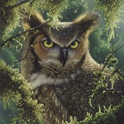 Great Horned Owl - Watching and Waiting