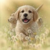 Golden Retriever Puppy - Dandelions - Square