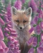 Red Fox - Foxgloves