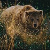 Brown Bear - Crossing Paths