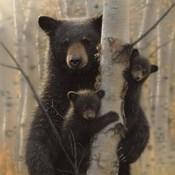 Black Bear Mother and Cubs - Mama Bear