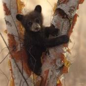 Curious Cub I