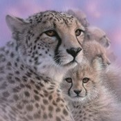 Cheetah Mother and Cubs - Mother's Love - Square
