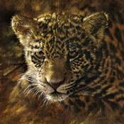 Jaguar Cub on Bark