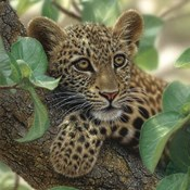Leopard Cub - Tree Hugger