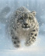 Snow Leopard - Snow Ghost - Vertical
