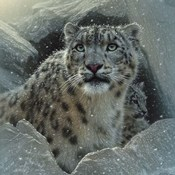 Snow Leopard - The Fortress