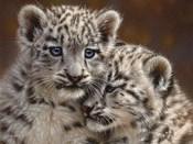 Snow Leopard Cubs - Playmates - Horizontal