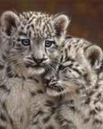 Snow Leopard Cubs - Playmates
