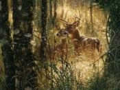 Whitetail Deer - A Golden Moment - Horizontal