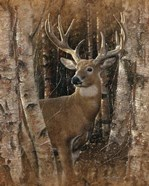 Whitetail Deer - Birchwood Buck