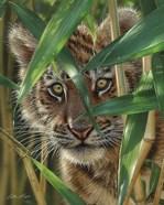 Tiger Cub - Peekaboo