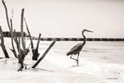 Shore Crane I