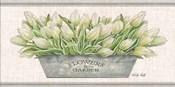 Flowers & Garden White Tulips