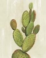 Front Yard Cactus I