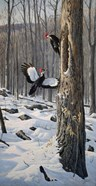 Swooping In - Pileated Woodpeckers