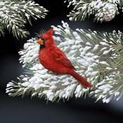 Night Cardinal