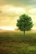 Lone Green Tree
