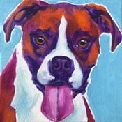 Boxer - Lucy