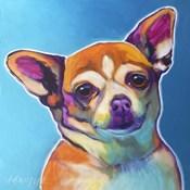 Chihuahua - Starr