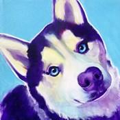 Husky - Dico