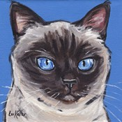 Cat Siamese On Blue