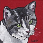 Cat Tabby On Red
