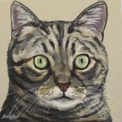 Cat Tabby Ontan